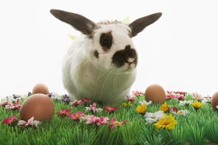 CTK bunny